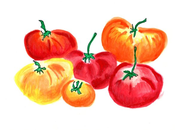 Watercolor painting of tomatoes